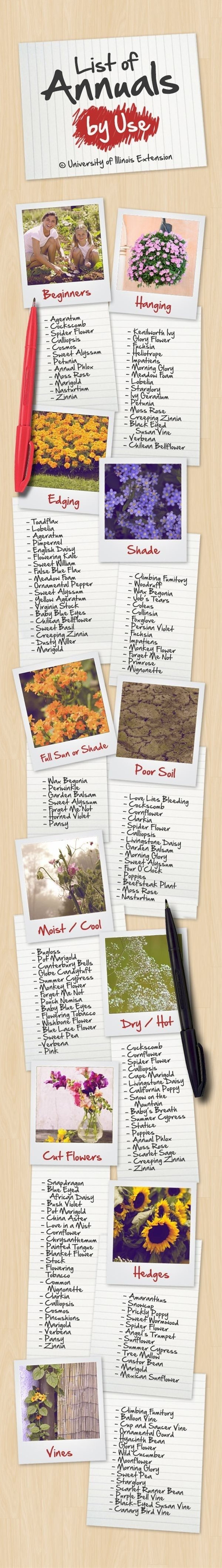 Here�s a list of how you can use annuals (plants that you need to replant every year) in your garden. | 23 Diagrams That Make Gardening So Much Easier
