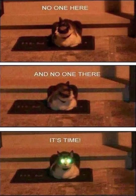 Attack of a funny cat
