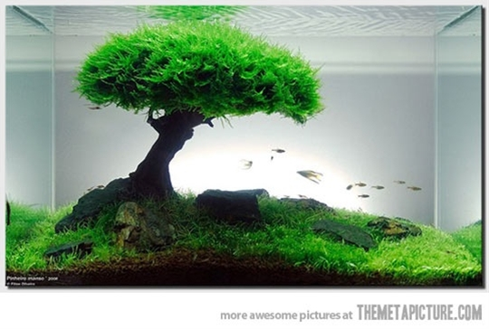new idea for your fish tank…