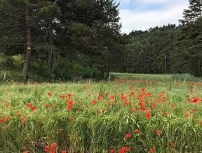 Countryside life just make me feel romantic! (à Aubrac,...