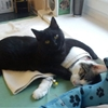 Meet the adorable nurse cat that comforts other animals when they're sick.