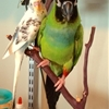 DIY Bird Perch from the VARIERA Shelf Insert