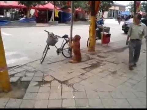 Best Dog Ever.  Dog Guards Owner's Bike!  Amazing Dog *ORIGINAL*