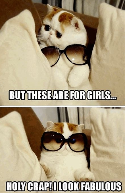 Funny Cat with Glasses Frames.