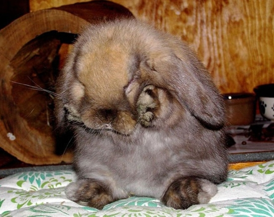 I want a baby bunny so bad!