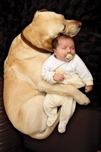 One day I'll need this..how to prepare your dog for a baby