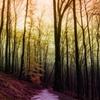 Colored Path photo © 2012 M.Pellot Photography...