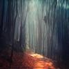 (via Magical Forest | Dirk Wuestenhagen Imagery) by Dirk...