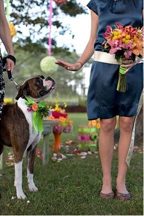 #dog #wedding #photograph #boxer