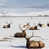 Photographed at The National Elk Refuge, WY. (Jan. 10, 2015)GSJC...