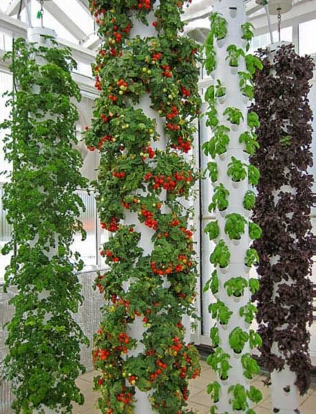 Not far from Orlando, Florida, an organic orange farmer and a biologist with Epcot Center experience have teamed up to build the true farm of the future.  On a rooftop above their city center, Green Sky Growers use aquaponics and vertical farming to grow massive yields of produce and fresh, healthy tilapia using less than 10% of the water needed for traditional farming.  As much a science lab as a farm, this facility uses a software-controlled greenhouse that ventilates based on local temperature, rotating plant towers that soak up solution from fish tanks, and happy tilapia that consume plant waste to produce nutrient-rich water.