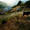 Guard dog at village in the Ancares mountains(See it at here) by...