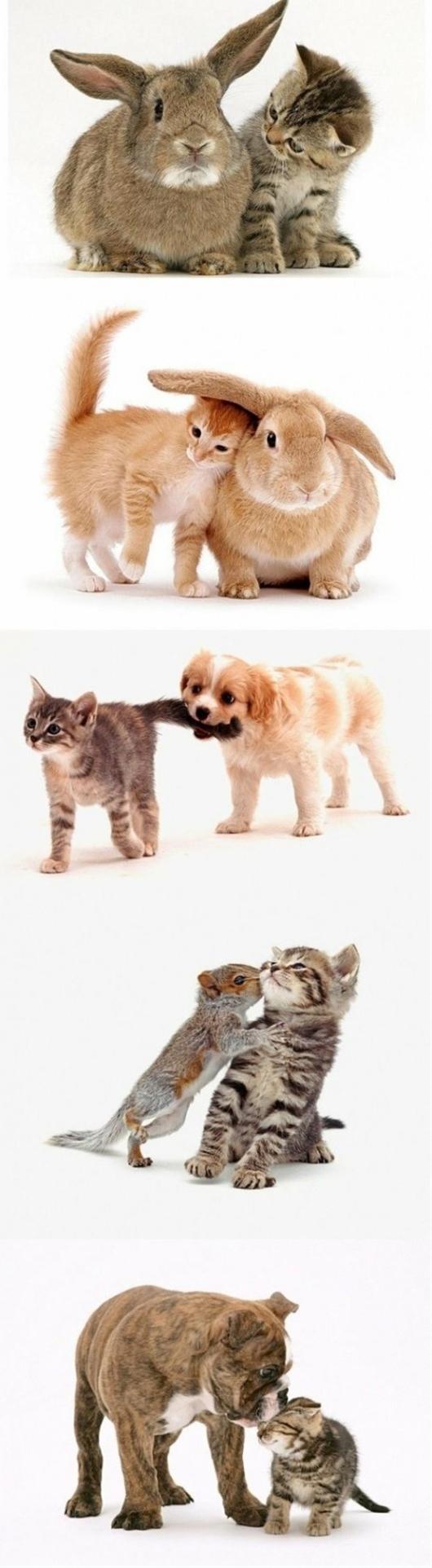 Baby animal love!