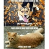 The mindset of a dog vs a cat 😕 #9gag