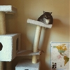 My cat may be getting too fat… #9gag