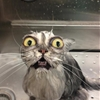 15 photos of cats that just can't deal with their baths.