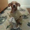 Master has given Dobby a sock. Dobby is free! 😍 #9gag
