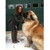 Meet Simba, a german mountain dog. So majestic! #9gag