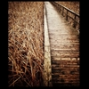 Walk the talk…..Boardwalk, Lyndeshore Conservation Area, Whitby,...