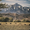 Lone Pine, California© 2014 Bruno-Max Photography, all rights...