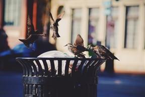 trash wings by Dastan Sadykov (thedoominati.tumblr.com)