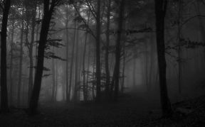 20 d'octubre de 2012. Boires a la fageda del Montseny. by...