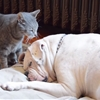 'When a Cat Loves a Bulldog' is the saddest rom-com in years.