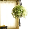 DIY Room Decor: How To Make A Recycled Bike Tube Plant Hanger — Apartment Therapy Reader Project Tutorial
