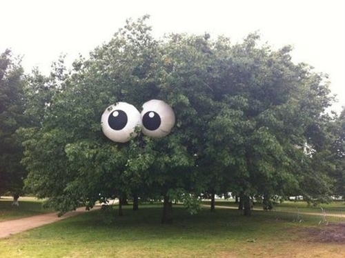 Beach balls painted to look like eyes put in a tree