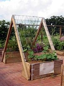 Cucumber TeePee by veggiegardener: Secret hiding place : ) #Cucumber_Teepee #veggiegardener