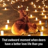 I love you deer