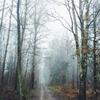 Chasing fog by Danijel Ivic (danijelivic.tumblr.com)