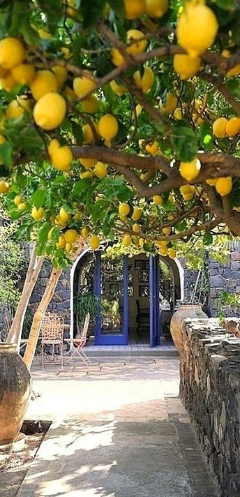 lemon trees....Amalfi,,Italy