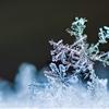 Snow by Basti Schrödl