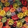 Philadelphia Flower Show… photo © James M Storment...