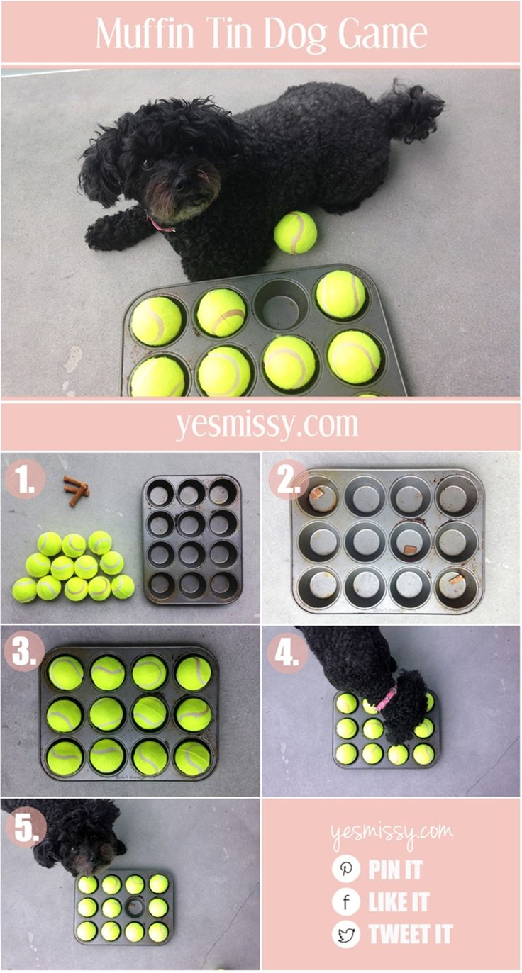 Lucky for you, here is one game they will never get tired of! This muffin tin dog treat game is a fun and entertaining activity to play with your dog. It's a perfect game to play anytime, it only requires a few materials, all of which you probably already have around your home.