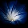 rise & shine | Matthew Blum by blumwurks...