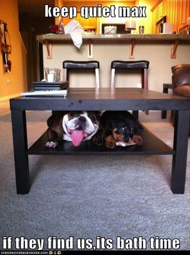 funny dogs under the table