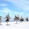 Winter landscape. by Carlos Ballester...