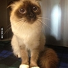 No more tuna? #9gag @awwclub