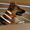 Slatt barkitecture dog houzz
