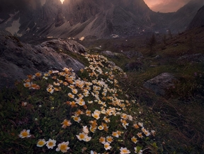 Flowers for Miles by Erin Babnik