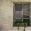 Window photo © Trevi (treviphoto.tumblr.com)