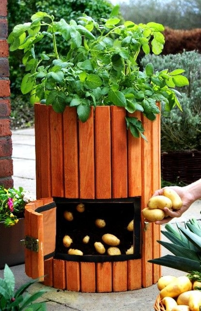 1. Select and prepare a container. 2. Choose a variety and plant potatoes. 3. Add more soil. 4. Harvest the potatoes.