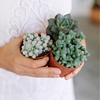 HOW TO REPOT SUCCULENTS AND CACTI
