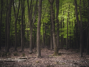 More Woods in Spring No.II - Oxfordshire, UKBy Freddie Ardley...