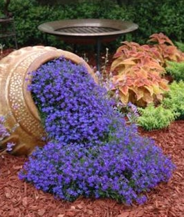 Planting inspiration with cascading flowers out of tipped over urn. Link goes to website which sells seeds.
