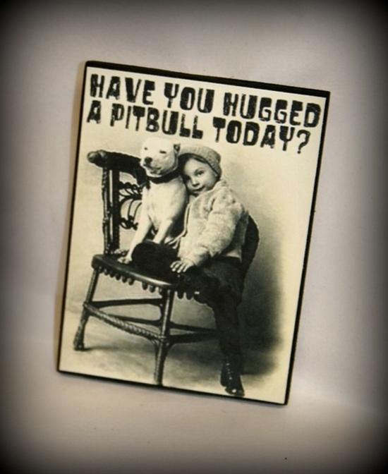 #pitbull, #pit bull