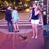 A duck on a leash wearing socks. #9gag