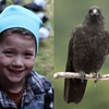 Crow whisperer, 8, being sued by her crow-hating neighbors for a whole lot of shiny things.